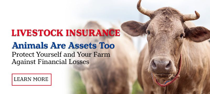 Livestock Insurance. Animals Are Assets Too. Protect you and your farm against the financial losses. Learn More.